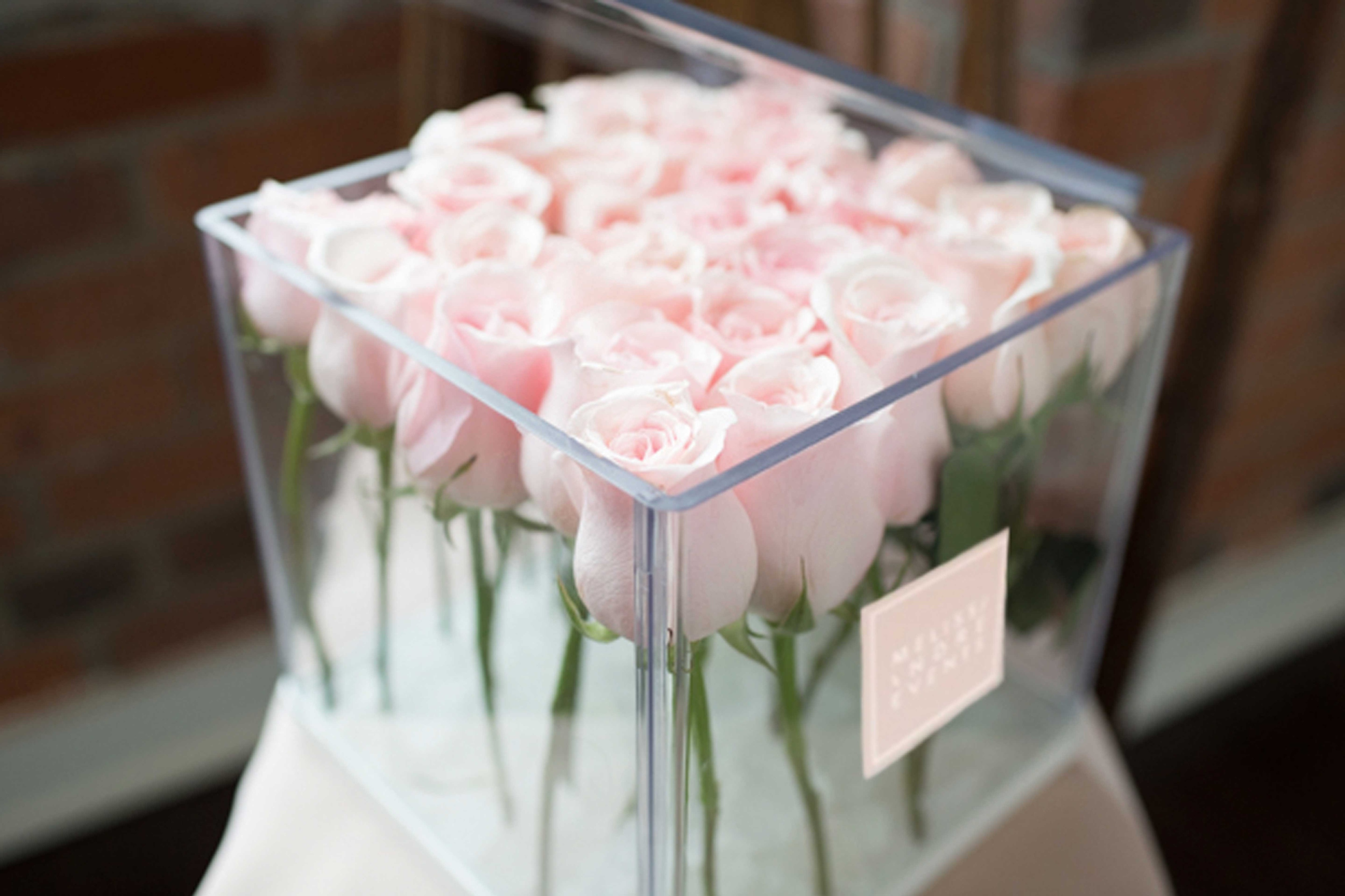 Melissa andre blooms roses